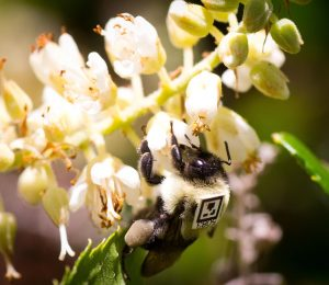 The study showed that the exposure of pesticides would be strongly affecting the bee's social behaviors
