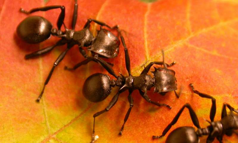 How plants have developed to ants their servants