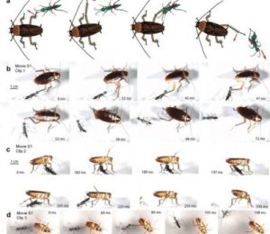 Biologist uses ultra slow motion to study insect protection – ScienceDaily