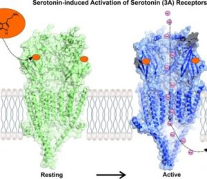 High-tech microscope reveals receptor focusing on drug development – ScienceDaily