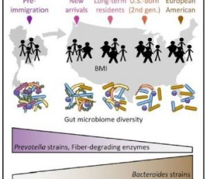 In the United States, immigration changes to human microbes – ScienceDaily