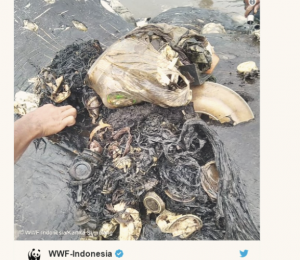 Sperm whales in Indonesia are installed in 6 kilograms of plastics