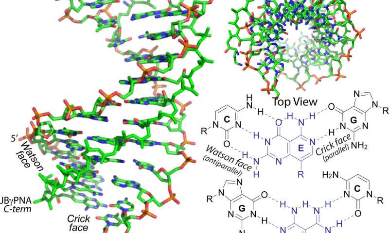 Synthetic molecule causes bilateral DNA