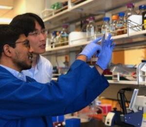 Technological innovation can be used to quickly new antibodies and pharmaceutical enzymes – ScienceDaily