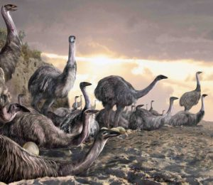 The elephant bird, which was the biggest bird known, was a night of light