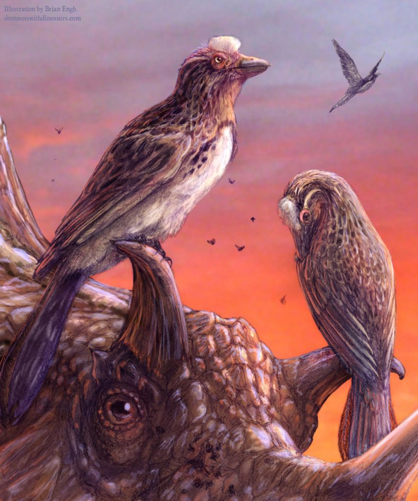 Artist impression Mirarce eatoni surrounded by horns ceratopsian dinosaurs Utahceratops gettyi. Both animals lived in Utah in the late Cretaceous (75 million years ago). Credits: Brian Eng.