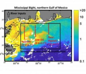 What can cause the Mississippi Bight to become hypoxic? – Science Daily