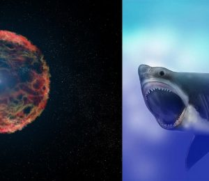 The exploding stars of the Big Ocean life 2.5 million years ago