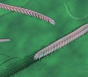 The newly discovered fossil worm shows that the early animals were more complex than we thought