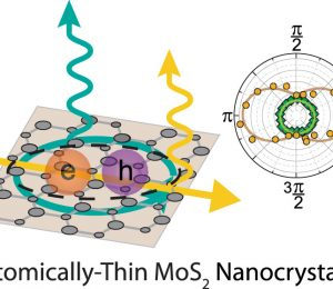 Linear polarized lamps for atomically thin MoS2 semiconductor nanocrystals