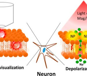 Nanoparticle-mediated imaging and cell membrane potential control: strategies, progress, and remaining issues