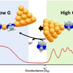 pH-activated single molecule conduction and imidazole binding mechanism on gold