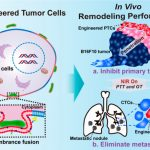 In Situ Cell Membrane Combination for Engineering Tumor Cells by Worm-like Nanocell Mimicry