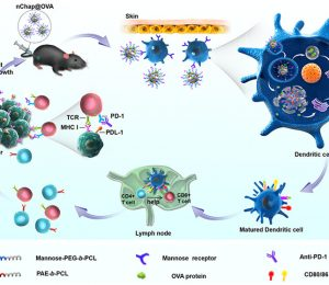Mimetic Heat Shock Protein mediates the immune process to enhance cancer immunotherapy